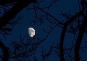 27th Dec 2017 - moon