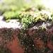 Moss Macro by robv