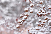 28th Dec 2017 - Snow icing!