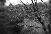 24th Dec 2017 - Rain