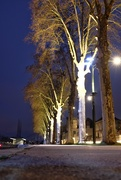 28th Dec 2017 - New lights for old plane trees