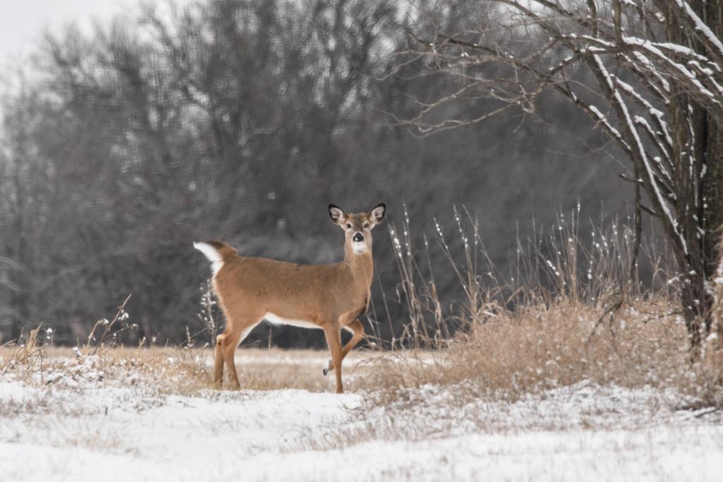Winter Pose by kareenking