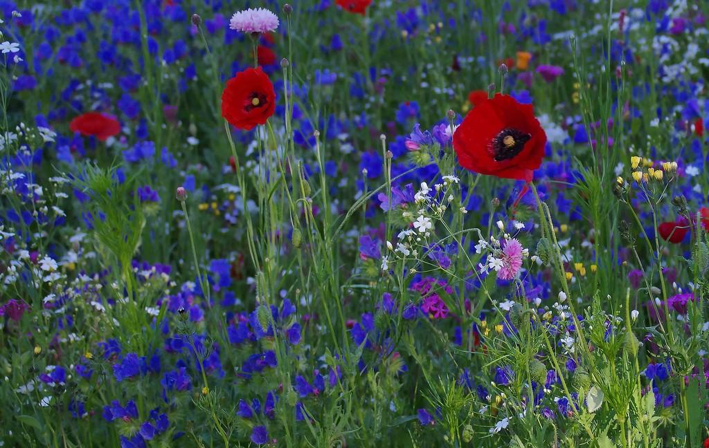 Wildflower meadow on a windy day by maureenpp