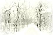 30th Dec 2017 - 2017-12-30 winter walk