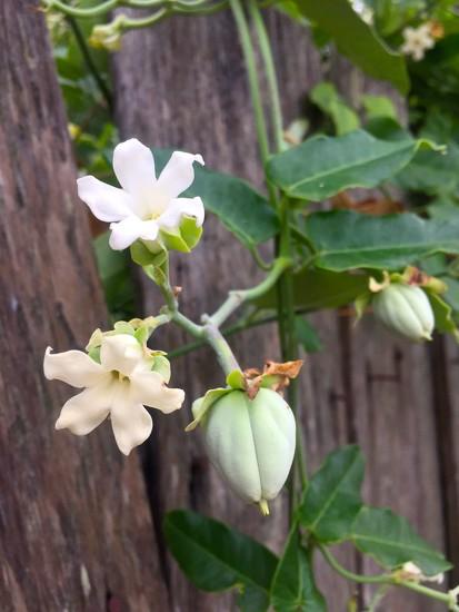 Flowers by kjarn