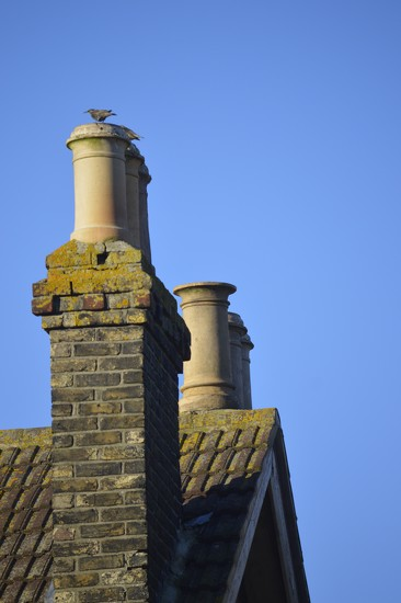 Chimney Pots and Starling by redandwhite