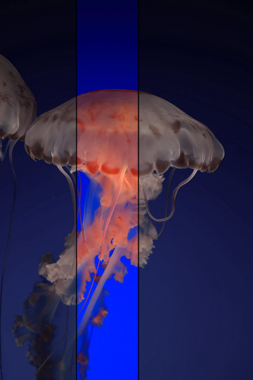 art jelly.2 by blueberry1222