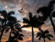 30th Dec 2017 - Sunset Palms
