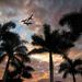Sunset Palms by pdulis