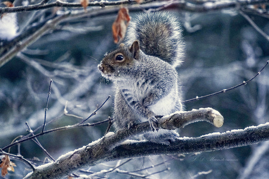 American-Squirrel Sign Language ... by Weezilou