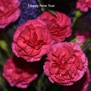 31st Dec 2017 - Flowers For New Year_DSC0983