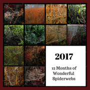 31st Dec 2017 - A Year for Spiderwebs