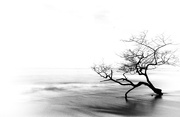 2nd Dec 2017 - Lone Tree ...