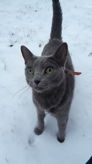 Duchess and snow by katriak