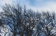 30th Dec 2017 - Blue Sky