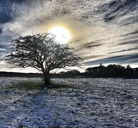 Dartmoor in the Snow by cookingkaren