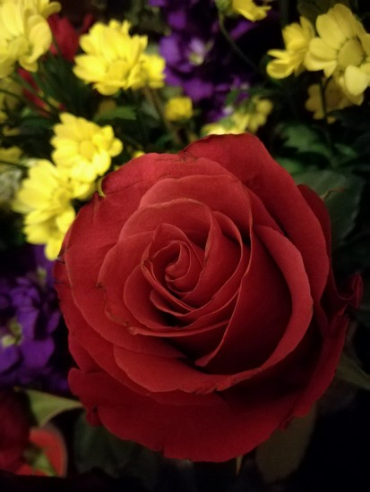 New,Year Flowers by plainjaneandnononsense