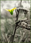 2nd Jan 2018 - Unknown small flower
