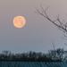 Setting Wolf Moon