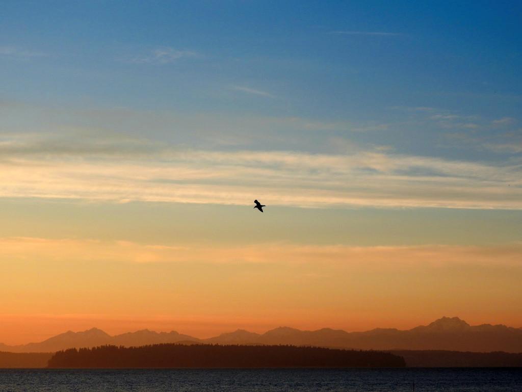 Soaring Seagull by seattlite