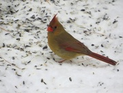 3rd Jan 1996 - Mrs. Cardinal.