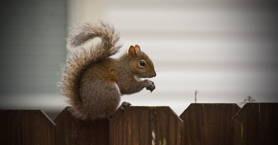Squirrel on the Fence! by rickster549