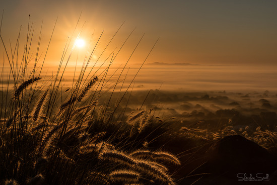 Foggy Morning Sunrise by bella_ss