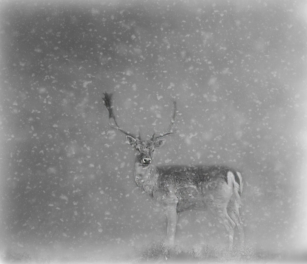 Winter Stag by jesperani
