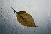 4th Jan 2018 - Leaf
