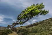 28th May 2017 - Prevailing wind