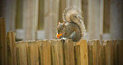 4th Jan 2018 - At Least the Squirrels are Cooperating!