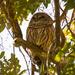 Sleepy Owl! by rickster549