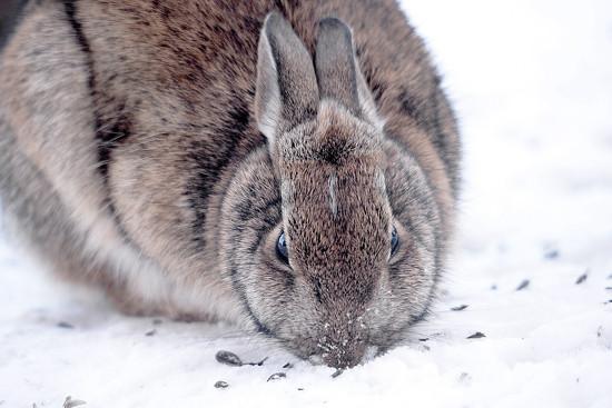 Wittle Bunny Wabbit is back! by fayefaye