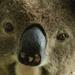 look into my eyes by koalagardens