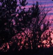 6th Jan 2018 -  Pink Purple Sky