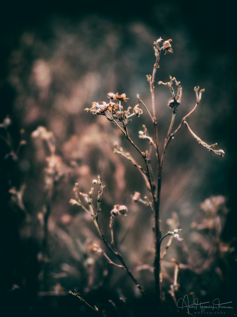Dry weather - finally… by atchoo