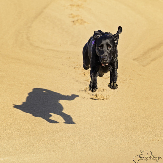 Pearl Leaping On the Dunes by jgpittenger