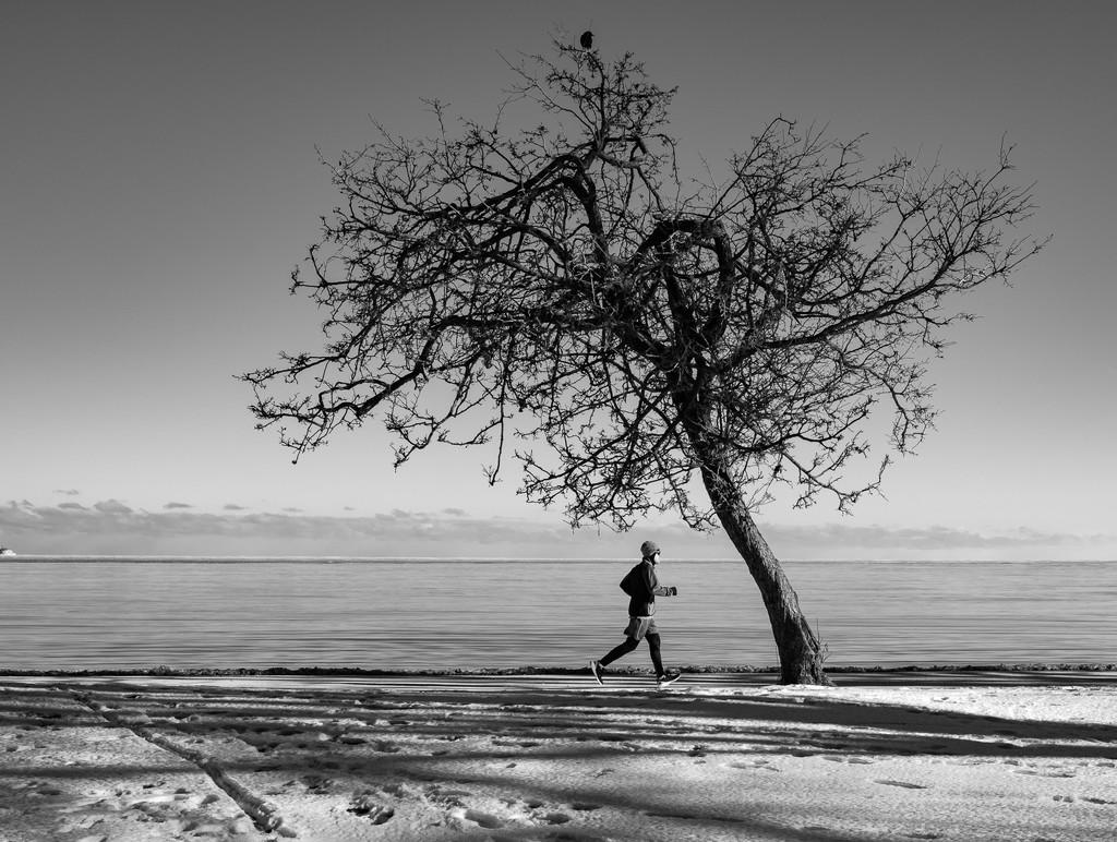 My Tree! by ukandie1