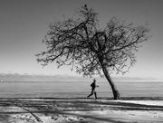 6th Jan 2018 - My Tree!