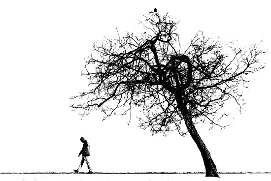 A Bird on and a Man Leaving Andie's Tree by taffy