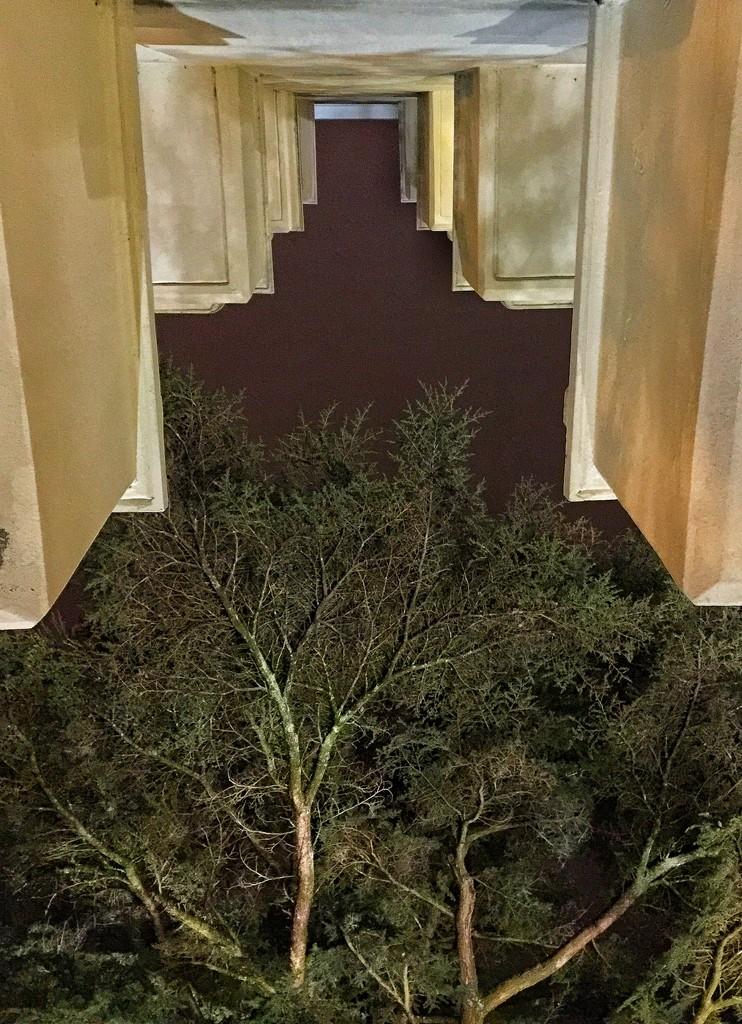 Balcony and tree.  by cocobella