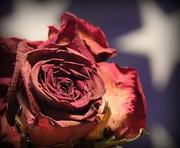 8th Jan 2018 - Rose Flag