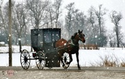 9th Jan 2018 - Amish In Iowa