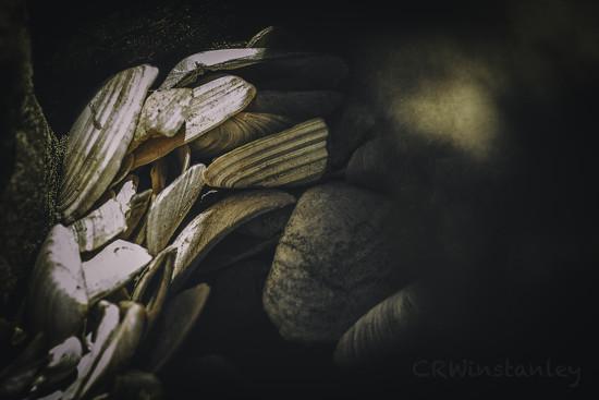 Nest of Shells by kipper1951
