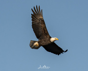 6th Jan 2018 - Eagles Clarksville