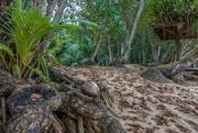 7th Jan 2018 - 003 - Tropical Forest near the beach