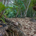 003 - Tropical Forest near the beach by bob65