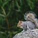 Sitting Squirrel by marylandgirl58