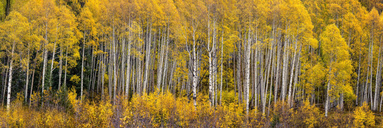 Finding Shelter In The Beauty of The Aspens by exposure4u