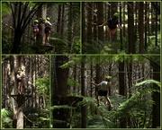 11th Jan 2018 - Adventure Forest